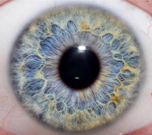 iris vs retina biometrics yes they really are different